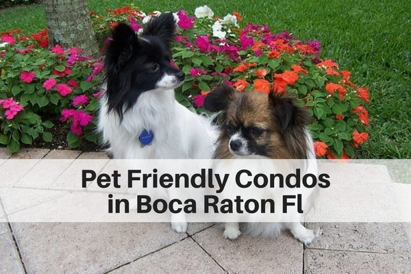 Pet Friendly Condos in Boca Raton, Highland Beach FL